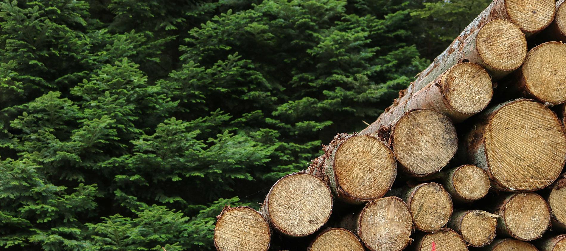 biomasse-foret