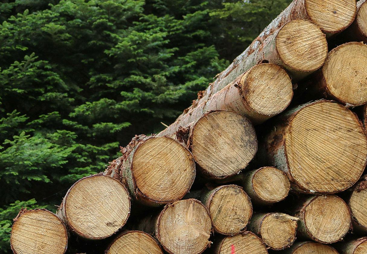 Image qui représente : Biomasse